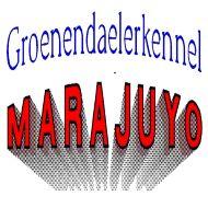 Groenendaelerkennel MARAJUYO